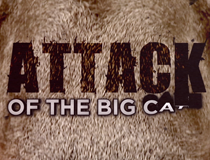 ATTACK OF THE BIG CATS